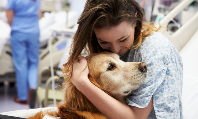 Photo of How Can Emotional Support Animals Aid In Anxiety