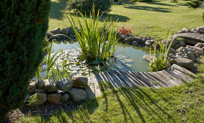 "Alt=""Beautiful classical garden fish pond surrounded by grass gardening background"""