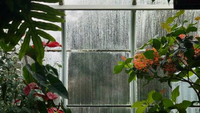 Photo of Understand the Science behind Condensation and How to Control it this Winter in Your Home