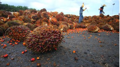 Photo of Is All Palm Oil Bad and Should You Avoid It?