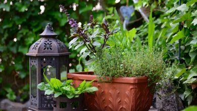 Photo of Benefits of Growing a Herb Garden