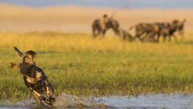 Photo of NU Borders' BITE Platform uses Advanced Analytics to Support Anti-Poaching in Southern Africa